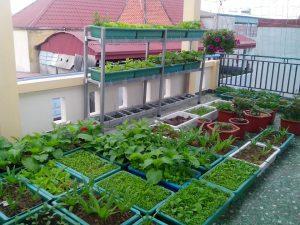 Những cách trồng rau tại nhà đơn giản